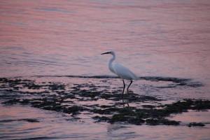 Vogel im Sonnenuntergang